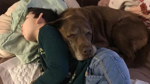 Therapiehund Emma und Alessandro