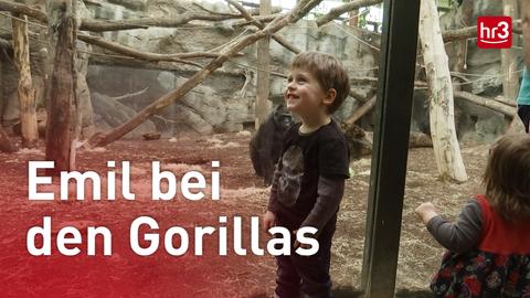 Emil und die Gorillas