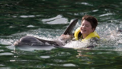 Delfinschwimmen in der Discovery Cove in Orlando