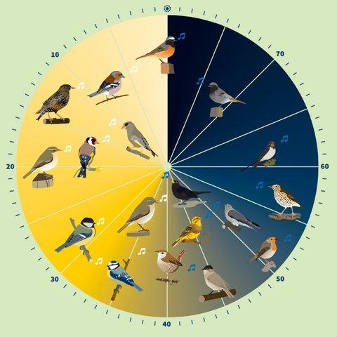 Die Vogeluhr des Nabu