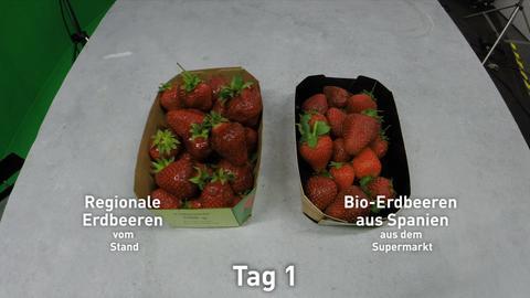 Ein Schälchen regionale Erdbeeren steht neben einem Schälchen Bio-Erdbeeren aus dem Supermarkt