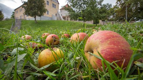 Äpfel liegen am Boden
