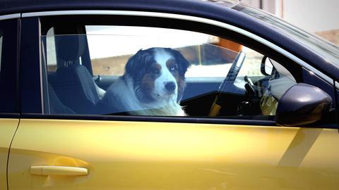 Geht gar nicht: Hund im Sommer im Auto lassen