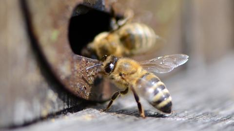 Bienen auf dem Weg nach Hause