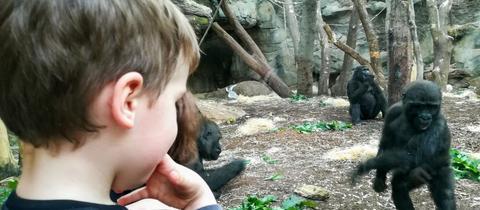 Emil feiert Weihnachten im Affenhaus.