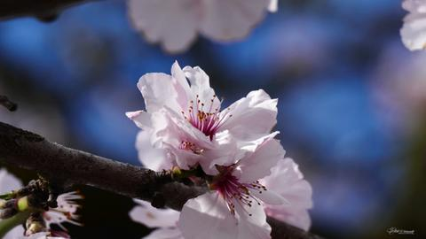 Eure schönsten Frühlingsbilder