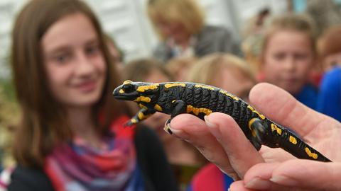 Salamander auf dem Hessentag