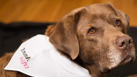 Therapiehund Emma