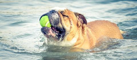 Hundestrände und Hundebadestellen in Hessen