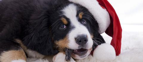 Hund mit Nikolausmütze