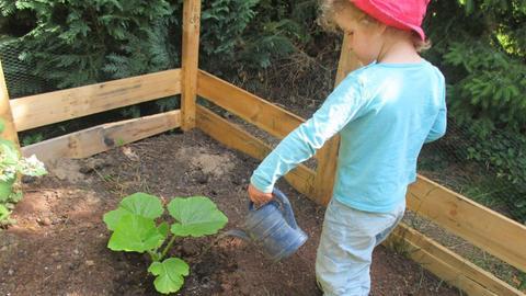 """Ein Kind aus dem Waldkindergarten """"Die Wühlmäuse"""" in Rodgau gießt die Kürbispflanze"""