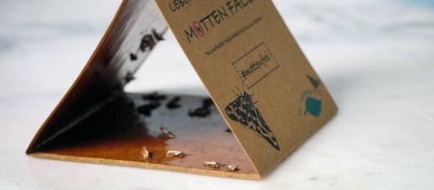 Lebensmittel Motte Falle