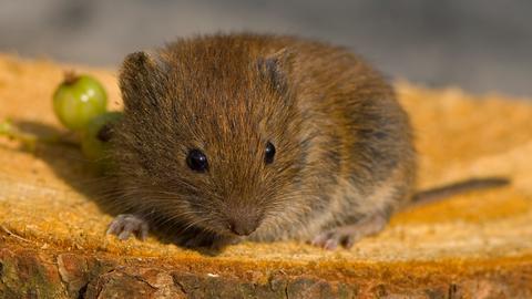 Maus auf Brot