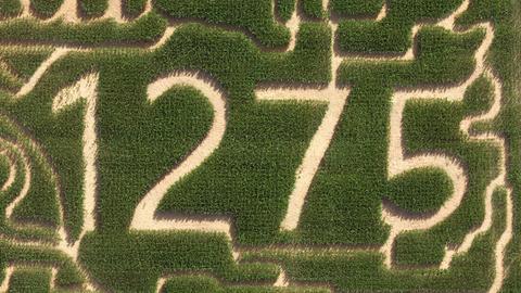 So sieht das Maislabyrinth in Groß-Umstadt dieses Jahr von oben aus