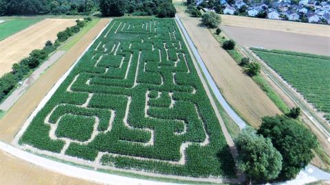 Auch das Maislabyrinth in Bickenbach ist nicht zu unterschätzen und wird Euch großen, kniffligen Spaß bringen.