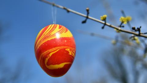 Im Tierpark Sababurg hängen dieses Wochenende die Eier an den Bäumen