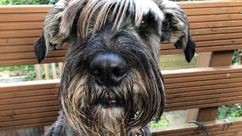 Problemhund Luke Skywalker wird zum Vorzeigehund