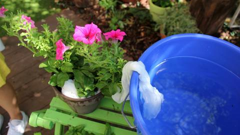 DIY Pflanzen Bewässerung