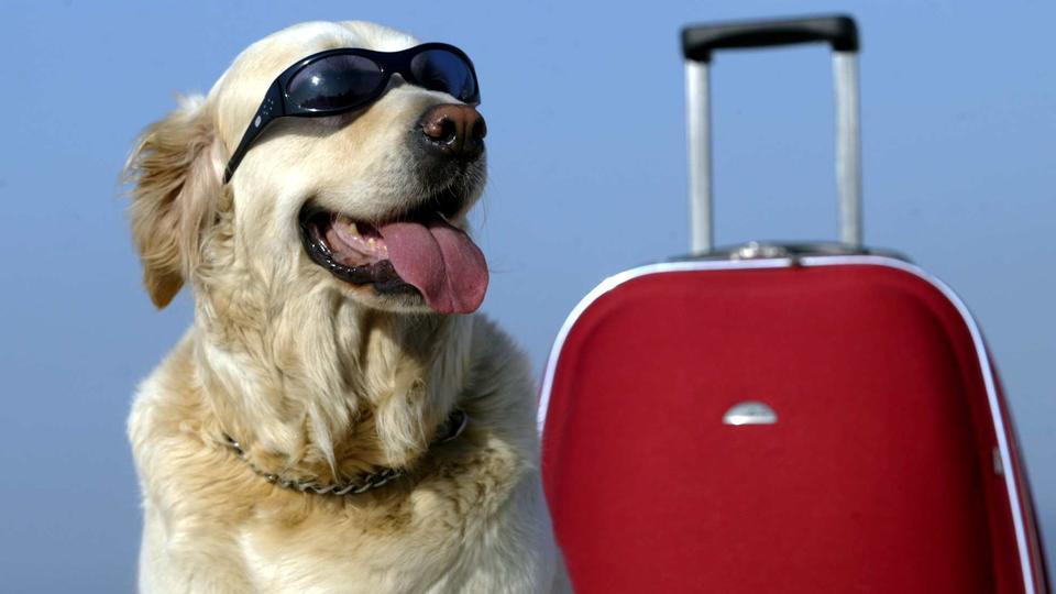 Wichtig: Sonnenbrille nicht vergessen!