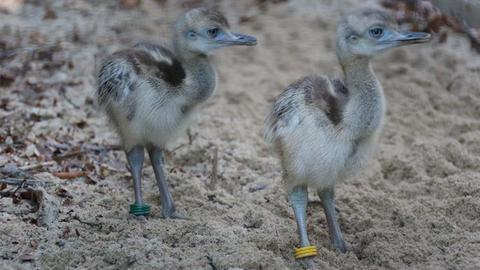 Nachwuchs im Opel Zoo