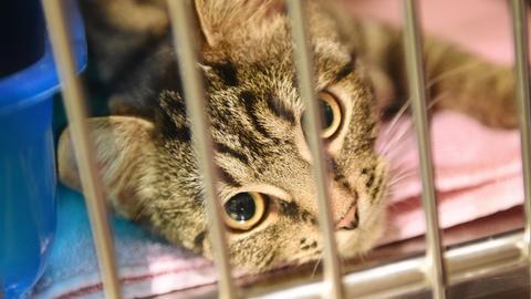 Eine kleine Katze wartet auf einen neuen Besitzer (Symbolfoto)