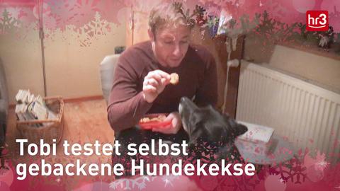 Tobi testet Hundeplätzchen