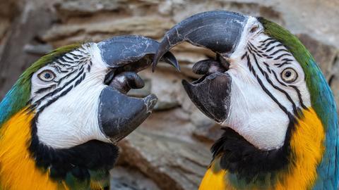 Papgeien in der Vogelburg in Weilrod