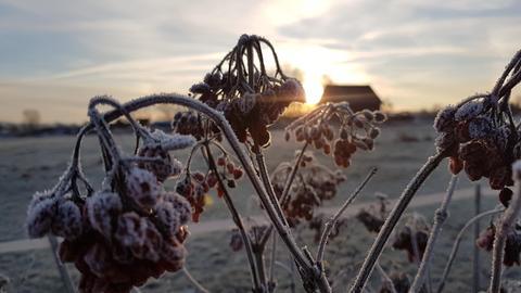 Winterbilder der Hörer