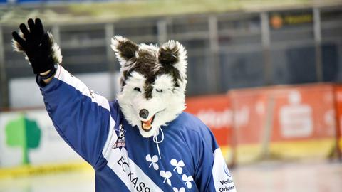 Das Maskottchen der Kassel Huskies