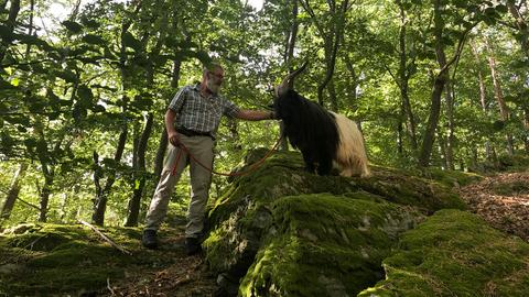 Älterer Mann mit angeleinter Ziege im Wald